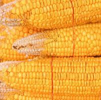 maíz amarillo foto