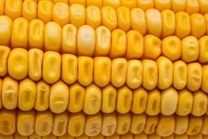 Corn close-up shot
