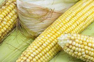 Partially revealed fresh yellow corn photo