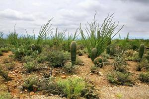 vista do deserto das montanhas catalina em tucson arizona