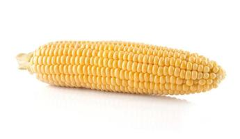 The  corn cob