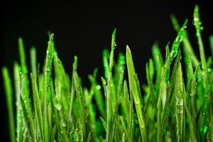 césped verde foto