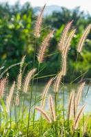 fuente de hierba foto