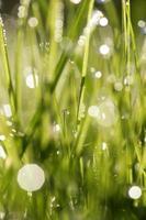 Grass fresh photo