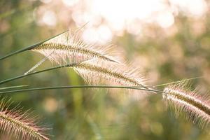flores de hierba