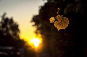 hoja de verano en puesta de sol