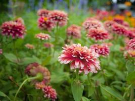 summer flower garden photo