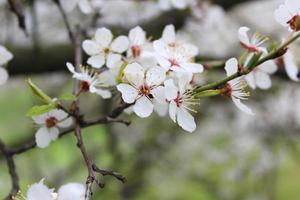 inicio de la primavera foto