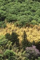 Spring bamboo photo