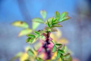 hojas de primavera foto