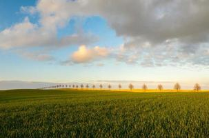 spring fields photo
