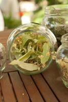 hierba de limón en frasco