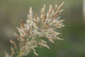 hierba silvestre en el campo foto