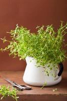 hierba de tomillo fresco en maceta de esmalte foto