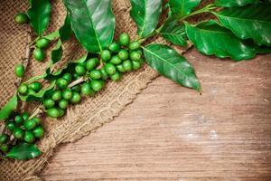 granos de café sobre fondo de madera foto
