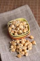 chickpea sprouts