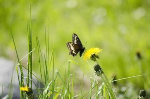 Butterfly celery photo