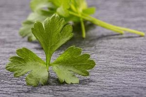 Parsley Top . Parsley or celery twig.