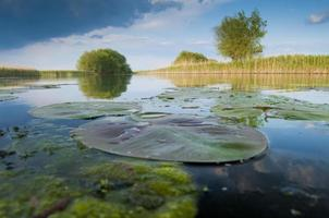 paisaje del delta del danubio foto