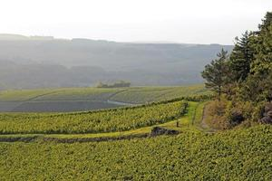 Landscape of vineyards photo