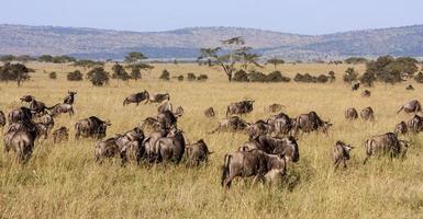 Beautiful African Landscape