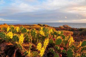 Tenerife South Landscape photo