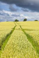 Rural landscape view