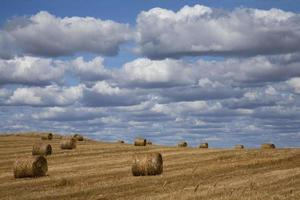 harvest landscape with clouds