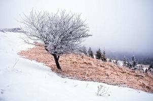invierno tranquilo paisaje de montaña