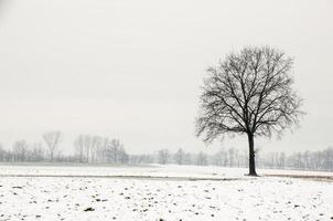 paesaggio invernale, albero solitario