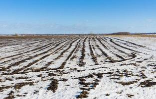 Agricultural landscape at winter season photo