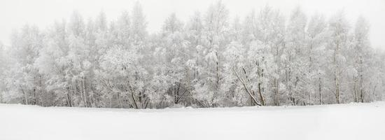 bois d'hiver