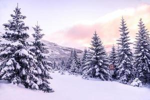 Beautiful winter forest landscape photo