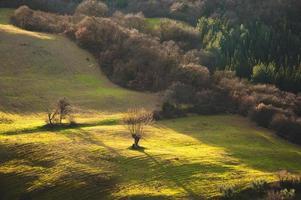 paisagem com florestas, campos e árvores