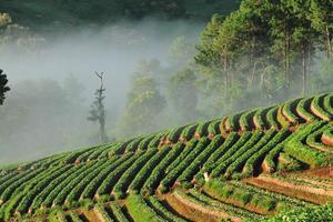 hermoso paisaje y granja de fresas frescas