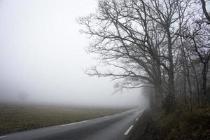 Road into landscape with fog photo