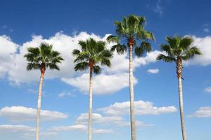 Four palm trees in a row