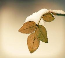 winter season photo