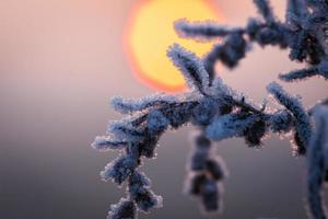 frozen winter photo