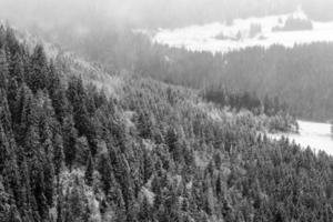 forêt noire d'hiver