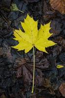 folha de inverno
