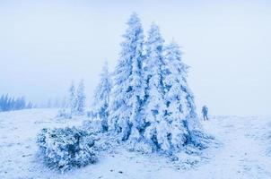 magical winter snow covered tree photo