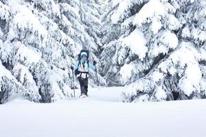 Hiker in the winter forest photo