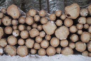 alemanha, troncos de árvore no inverno