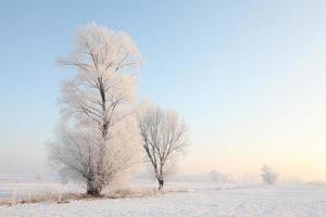 Frosty winter trees at dawn photo