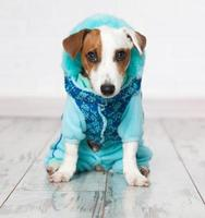 Dog in winter clothes