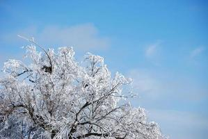 Nesting In Winter