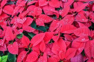 flawer en invierno foto