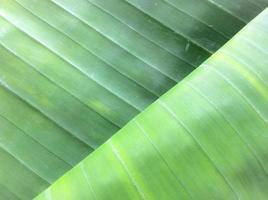 hojas de plátano foto