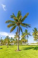beautiful Miami Beach with palm trees